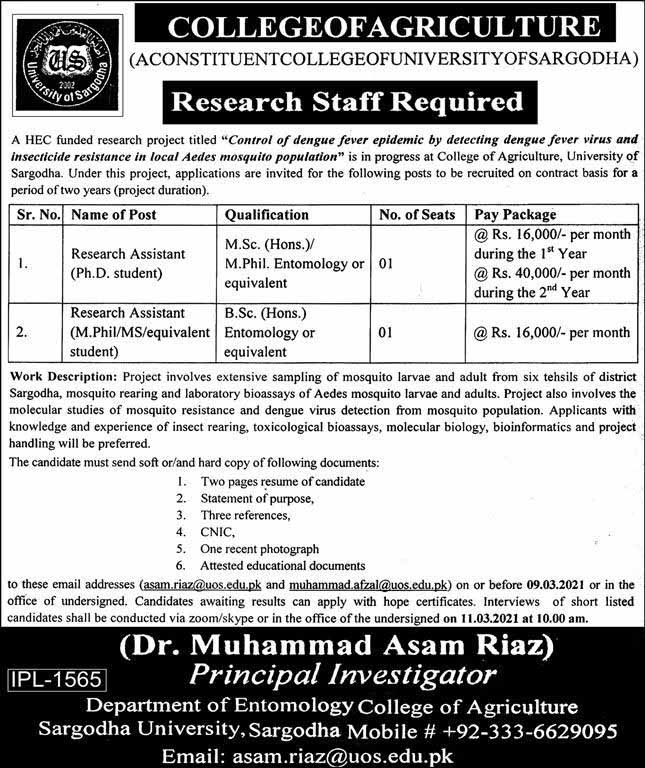 Research Staff Jobs in College of Agriculture Sargodha Univeristy 2021
